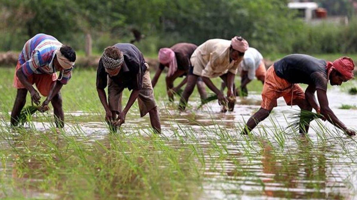कृषि बिल हंगामा बिहार के भोजपुर में कृषि बिल के विरोध में उतरे किसान, NH-30 को किया जाम