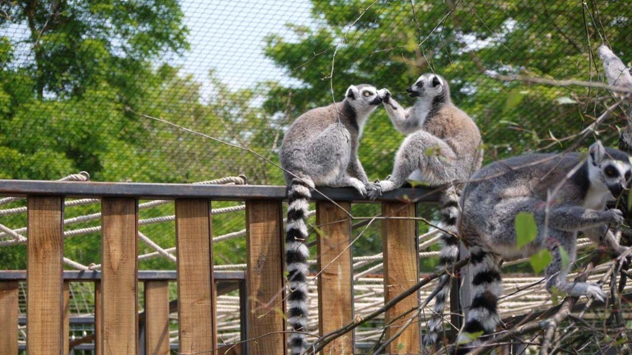 Bihar Zoo