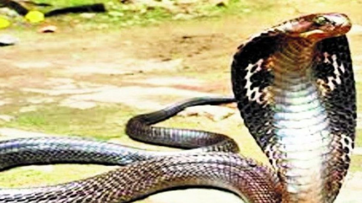Snake bite 5 Lakh rupees by government