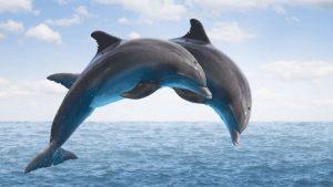 Bihar national dolphin research center near patna university