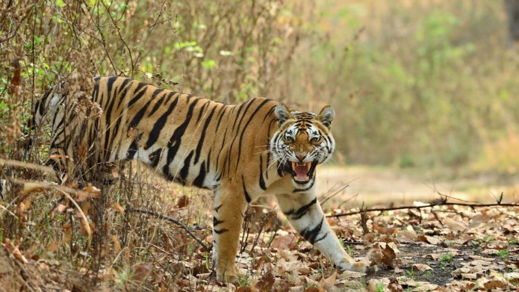 Kaimoor tiger reserve bihar