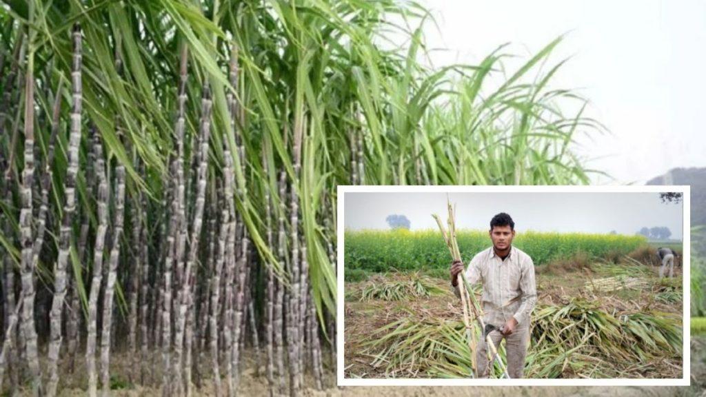 bihar sugarcane farmer