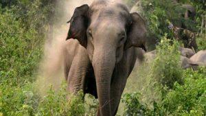 Elephants in bihar