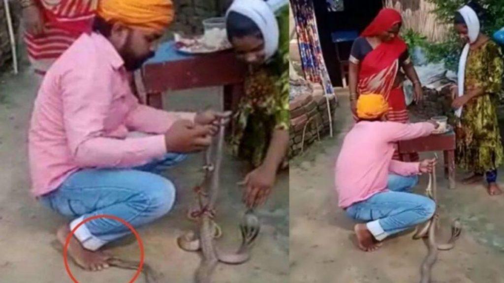 Viral video of snake bite in saran