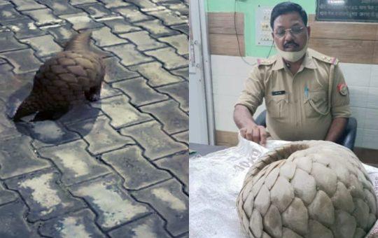 pangolin found in noida
